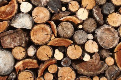 YIN YOGA Workshop – Element Holz